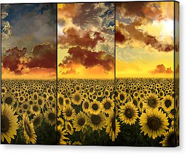 Digital Sunflower Canvas Print - Sunflowers Triptych by Bekim Art