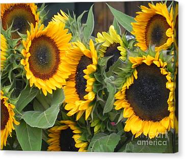 Canvas Print featuring the photograph Sunflowers Two by Chrisann Ellis