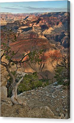 Canvas Print featuring the photograph Sunkissed Canyon by Stephen  Vecchiotti