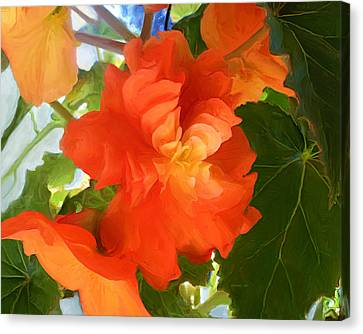 Sunkissed Orange Begonias Canvas Print