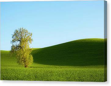 Sunkissed Canvas Print by Ryan Manuel