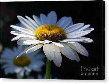 Sunlight Flower Canvas Print by John S