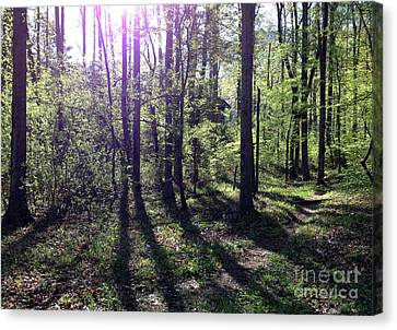 The Nature Center Canvas Print - Sunlight From The East by Janet Felts