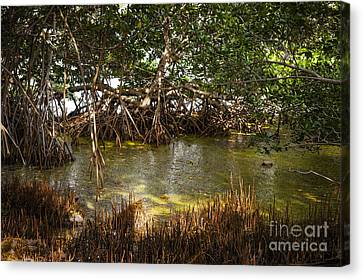 Mangrove Forest Canvas Print - Sunlight In Mangrove Forest by Elena Elisseeva