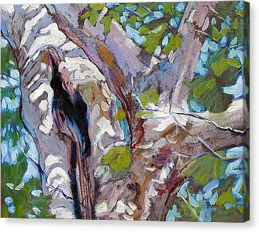Sunlight On Sycamore Canvas Print by John Lautermilch