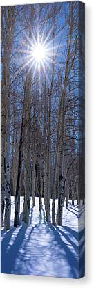 Flagstaff Canvas Print - Sunlit Aspens by Mikes Nature
