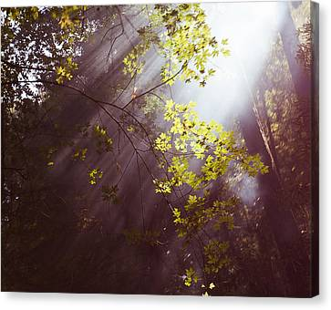 Canvas Print featuring the photograph Sunlit Beauty by Lora Lee Chapman