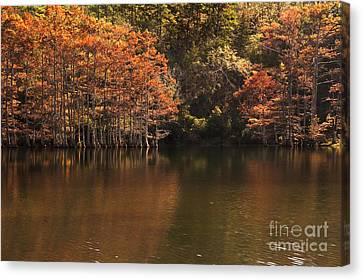 Canvas Print featuring the photograph Sunlit Cypress Trees On Beaver's Bend by Tamyra Ayles