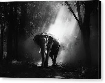 Sunlit Elephant Canvas Print by Sasin Tipchai