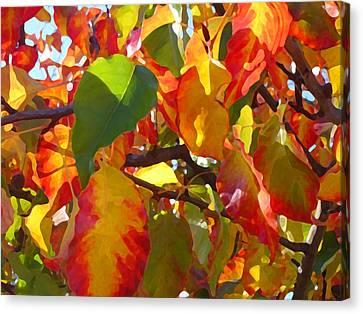 Sunlit Fall Leaves Canvas Print by Amy Vangsgard