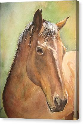 Sunlit Horse Canvas Print by Patricia Pushaw