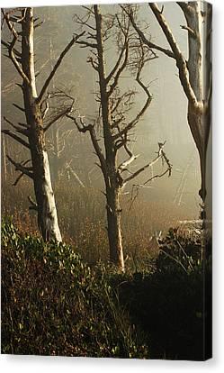 Sunlit Morning Canvas Print