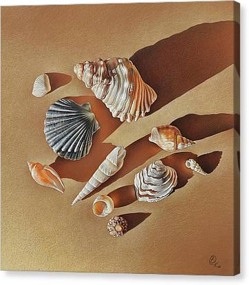 Sunlit Shells Canvas Print by Elena Kolotusha