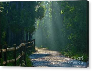 WOODLAND FOREST TREES CANVAS PICTURE PRINT WALL ART 748