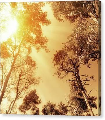 Sunlit Tree Tops Canvas Print by Wim Lanclus