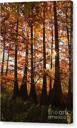 Canvas Print featuring the photograph Sunlit Trees At Lake Murray by Tamyra Ayles