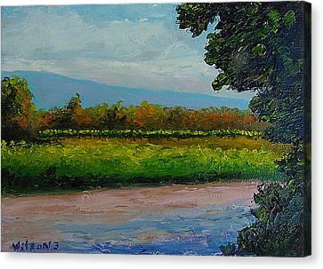 Sunlit Vinyard Canvas Print by Fred Wilson