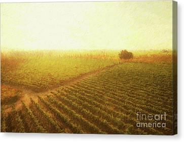 Grape Vine Canvas Print - Sunrise Over The Vineyard by Diane Diederich