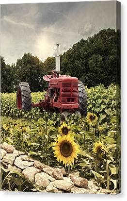Canvas Print featuring the photograph Sunny Acres by Robin-Lee Vieira