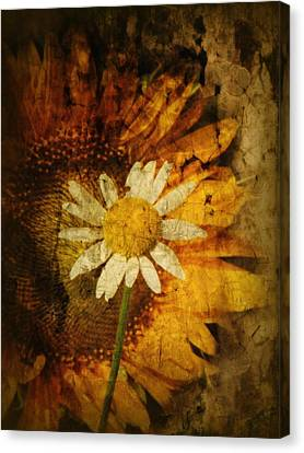 Sunny Antiqued Canvas Print by Tingy Wende