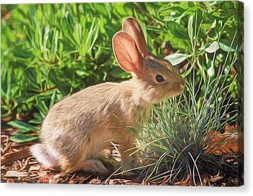 Sunny Bunny Canvas Print by Donna Kennedy