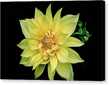 Canvas Print featuring the photograph Sunny Dahlia by Julie Palencia