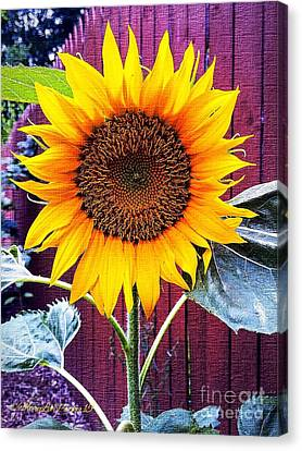 Sunny Day Canvas Print by MaryLee Parker
