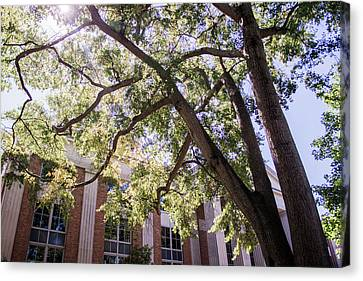 Sunny Days At Uga Canvas Print by Parker Cunningham