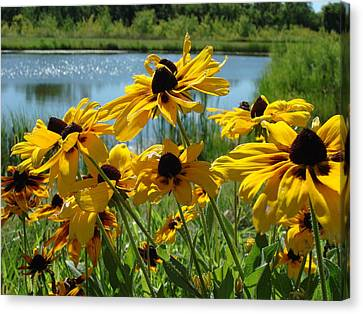 Sunny Days Canvas Print by Christie Minalga