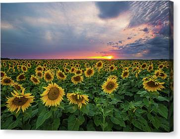 Sunny Disposition  Canvas Print by Aaron J Groen