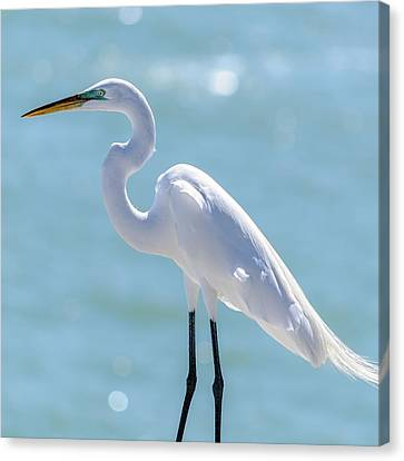 Canvas Print featuring the photograph Sunny Egret by Steven Sparks