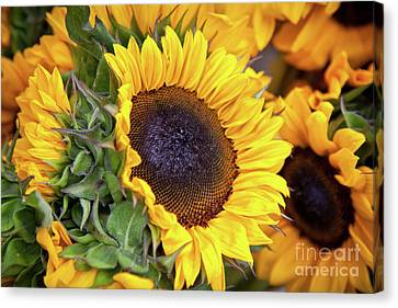 Canvas Print featuring the photograph Sunny Face by Susan Cole Kelly