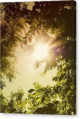 Sunny Forest Canvas Print by Wim Lanclus