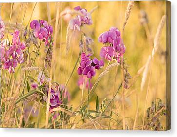 Sunny Garden 1 Canvas Print by Bonnie Bruno