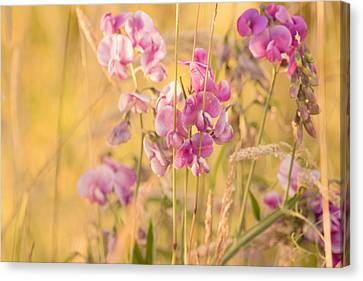 Sunny Garden 3 Canvas Print by Bonnie Bruno