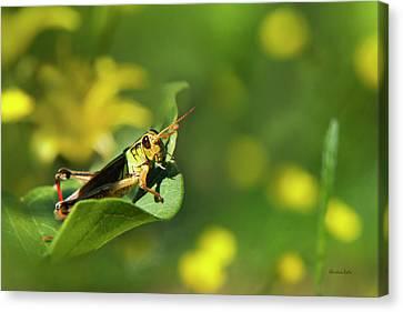 Grasshopper Canvas Print - Green Grasshopper by Christina Rollo