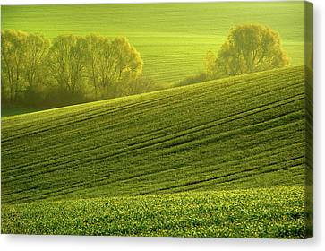 Canvas Print featuring the photograph Sunny Green by Jenny Rainbow