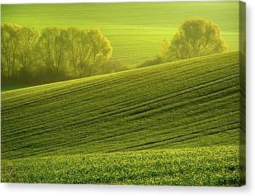 Sunny Green Canvas Print