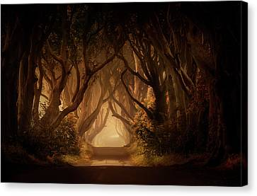 Sunny Morning In Dark Hedges Canvas Print by Jaroslaw Blaminsky