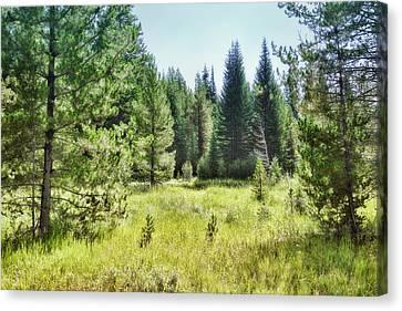 Sunny Mountain Meadow - Landscape Photograph Canvas Print by Ann Powell