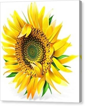 Sunny Canvas Print by Now