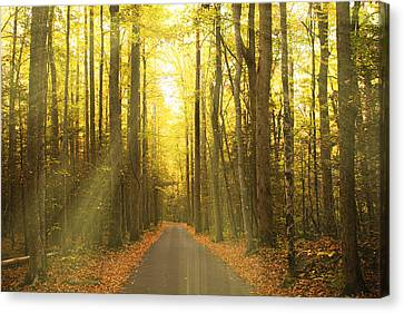 Tennessee Historic Site Canvas Print - Sunny Roaring Fork Road by Jonas Wingfield