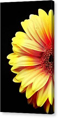 Sunny Side Over Easy Canvas Print