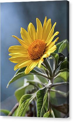 Canvas Print featuring the photograph Sunny Side Up  by Saija Lehtonen