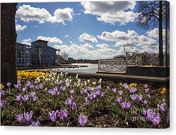 Sunny Spring Flowers In Helsinki Canvas Print
