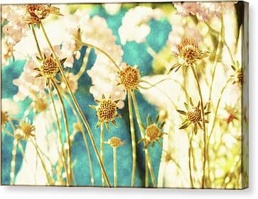 Sunny Strawflowers Canvas Print by Bonnie Bruno