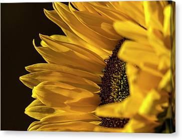 Canvas Print featuring the photograph Sunny Too By Mike-hope by Michael Hope