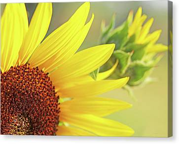 Canvas Print featuring the photograph Sunny Yellow Sunflower by Jennie Marie Schell