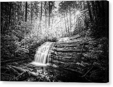 Sunrays In The Forest Black And White Canvas Print by Debra and Dave Vanderlaan