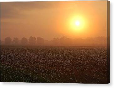 Sunrise And The Cotton Field Canvas Print by Michael Thomas